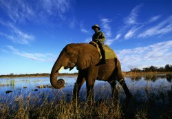For Kids: Facts About Elephants!