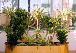 Растения в доме и здоровье