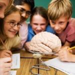 Формирование мозга ребенка: раннее развитие и билингвизм