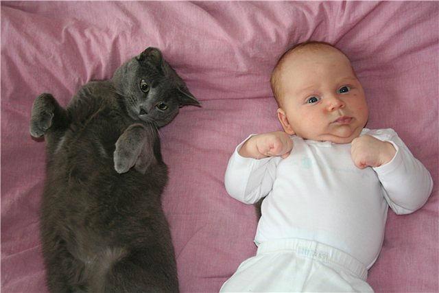 Кошки ухудшают память у детей