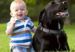 Дети реже болеют, если в доме есть животное