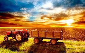 Як підвищити врожайність? Мінеральні добрива