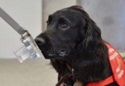 Как собаки могут диагностировать рак