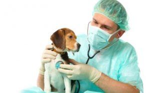 Рвота пеной у собаки — сервис клиники «Био-Вет» по обслуживания четверолапых пациентов