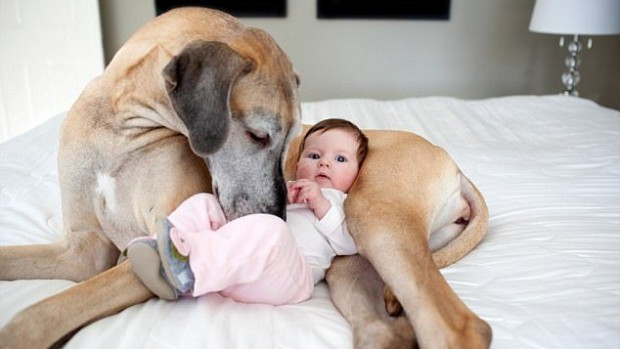 Домашние животные защитят детей от ожирения и аллергии