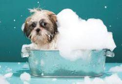 Секреты блестящей шерсти собак