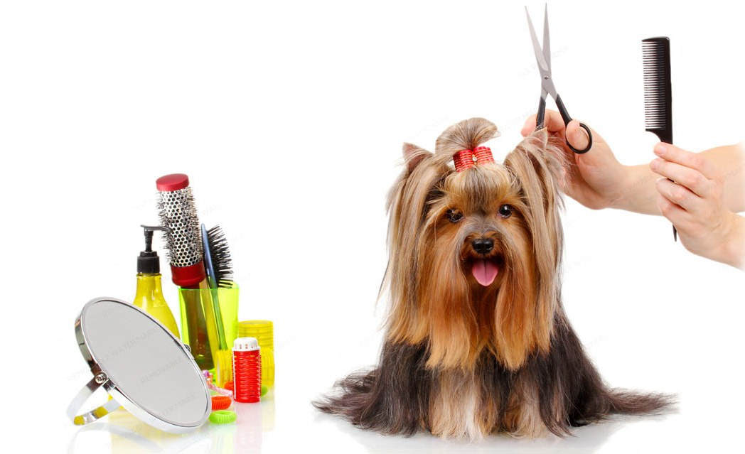 Ультрамодный бьюти-уход для собак