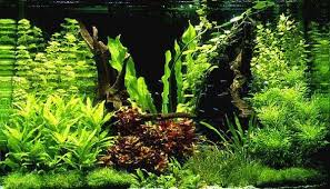 Аквамагаз – продает товары для сферы аквариумистики