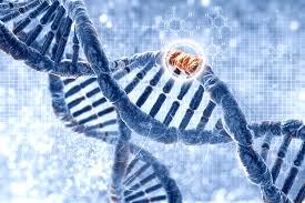 Генетические тесты