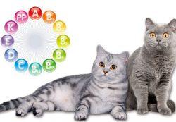 Особенности выбора витаминов для животных