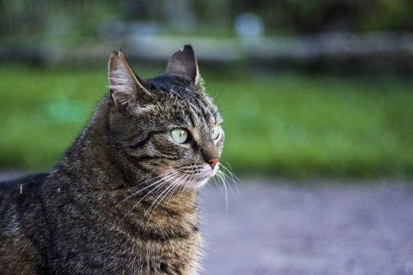 Такой непростой кошачий характер