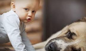 Почему стоит завести домашнее животное?