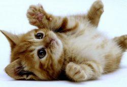 Приобрести породистых щенков и котят в Москве недорого с клубом Суперминики