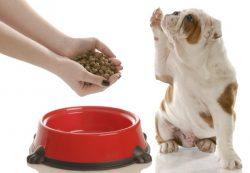 Особенности сухого корма для собак. Его виды
