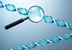 Что такое тест ДНК: для чего необходим, когда используется и в чем преимущества процедуры?