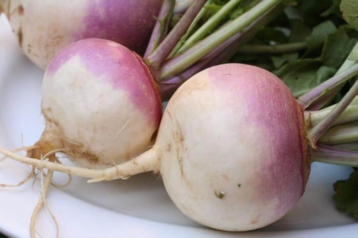 Древний овощ. Репа
