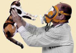 Аллергия на кошек: симптомы и причины ее возникновения