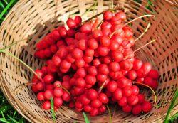 Полезные свойства ягод лимонника
