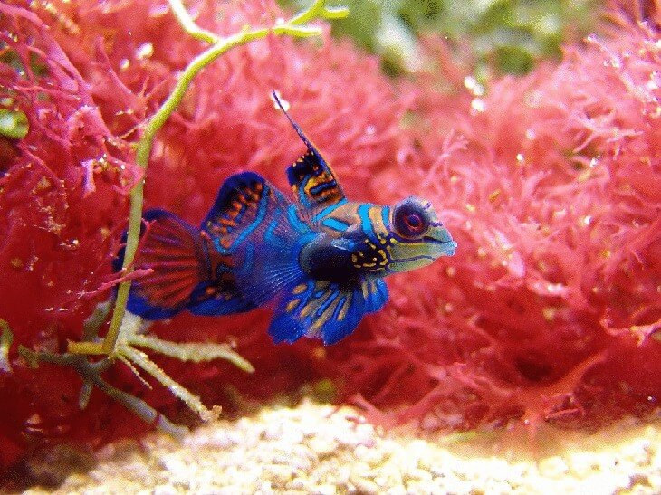 Каких рыбок выбрать для аквариума?