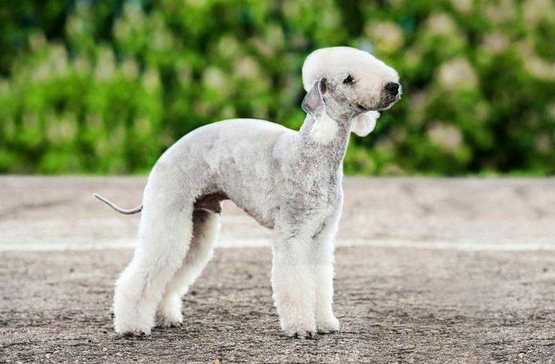 Дети и домашние животные: правила дружбы