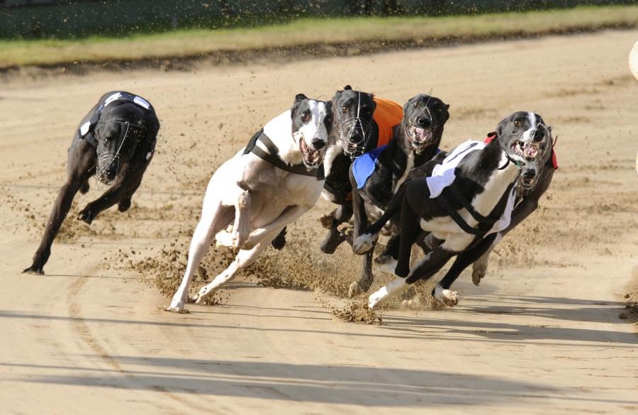 С какой скоростью бегают собаки?