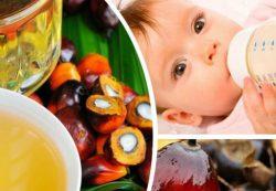 Пальмовое масло в детском питании – чем оно опасно и в каких смесях содержится?