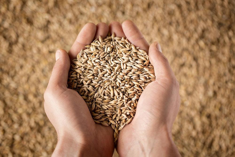Влагомеры зерна: типы и характеристики