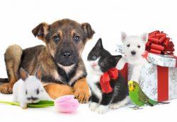 Магазин «Мурчик» для любимых животных