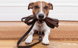 Какую амуницию необходимо купить для собаки
