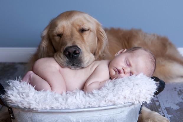 Чем опасны домашние животные для маленьких детей?