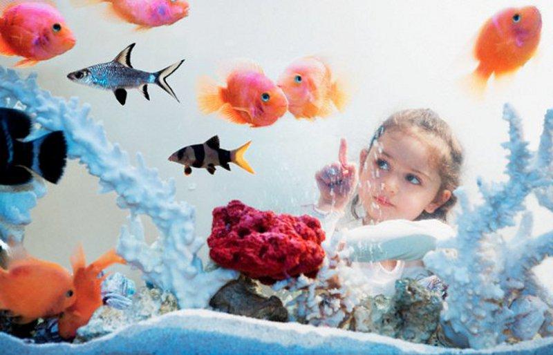 Как воспитать ответственность у ребенка с помощью аквариума?